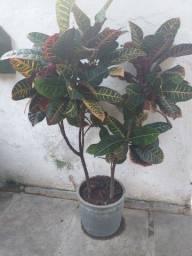 Vendemos plantas com muitas variedade e bem tratada