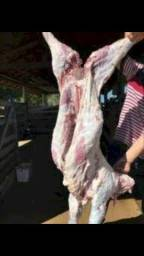 Vende-se ovinos cordeiro Carneiro abatido