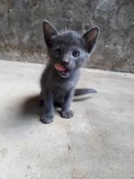 Gatinhos em adoção