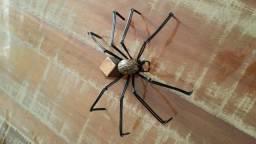 Aranha decorativa