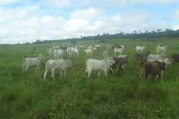 850 alqueires no Pará documentada por 30 milhões