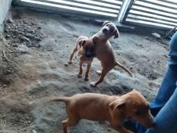 Estou doando 3 cachorrinhos