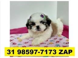 Canil Cães Perfeitos Filhotes BH Shihtzu Beagle Poodle Lhasa Maltês Yorkshire Basset