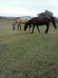 Cavalo Aceito propostas