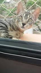 Vendo gatinho 6 meses castrado