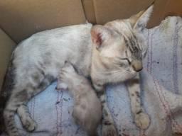Doacões de gatinhas