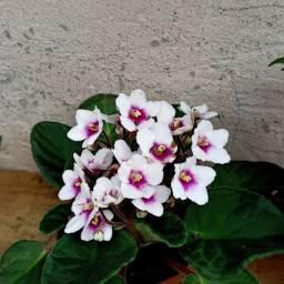 Flores variadas a parte de R$10