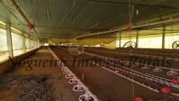 Sítio com granja, capacidade para 30.000 frangos (Nogueira Imóveis Rurais)