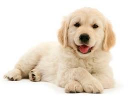 Título do anúncio: Filhotes com pedigree, venha conhecer