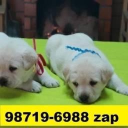 Canil Filhotes Cães Belos BH Labrador Pastor Akita Boxer Golden Rottweiler Dálmata