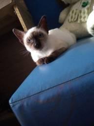 Estou doando essa gatinha,ela tem 4 meses.