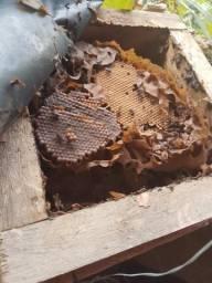 Caixa pra abelhas sem ferrão jatai mirim tubun