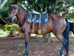Vendo égua mangalarga Machador