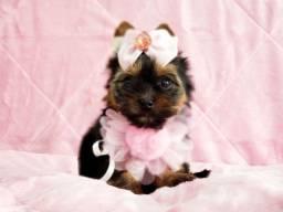 Filhote fofíssima de yorkshire terrier fêmea à pronta entrega