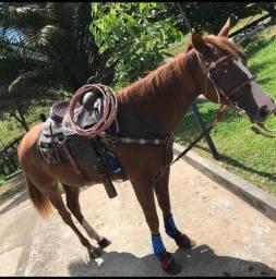 Título do anúncio: Égua a venda prenha de cavalo po