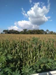 Excelente terreno de 5ha, Mateus Leme, plano, parcelo 1+4, ideal para chácaras - MG