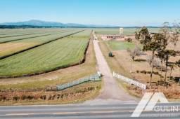 Fazenda para Venda em Tijucas do Sul