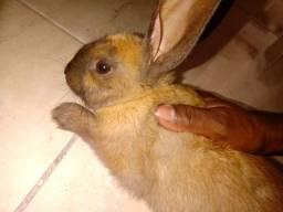 Vendo esse lindo coelho