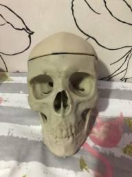 Crânio anatômico