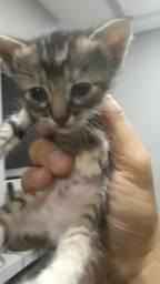 DOAÇÃO de gatinhos, lindos Pets