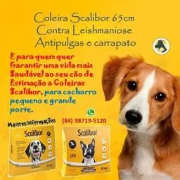 Coleira Scalibor MSD contra pulgas, carrapatos