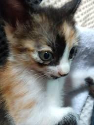 Doação gato/gata