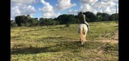 Lindo Potro Paint Horse