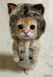 Alguém doando filhotes de gatos?