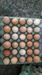 Ovos de galinha caipira galado exclusivo para chocar