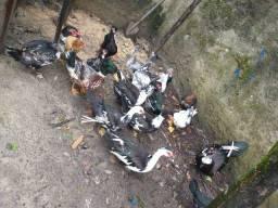 Patos e patas uma caixa de som