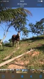Título do anúncio: Cavalo de passeio