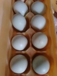 Título do anúncio: Ovos Verde Galados de Galinha Caipira