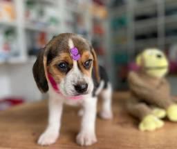 Título do anúncio: Lindos beagle bebês disponível