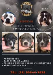 Título do anúncio: FILHOTES AMERICAN BULLY