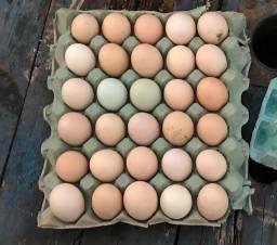 Título do anúncio: Ovos Galados Galinha Caipira - Fertéis