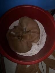 Doação de cachorro 3 filhotes