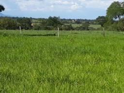 Fazenda de 484 hectares toda na cultura em Formosa-GO