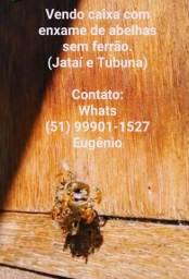 Abelhas sem ferrão ( Jataí e Tubuna )