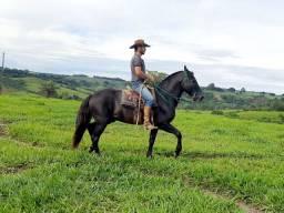 Cavalo preto !