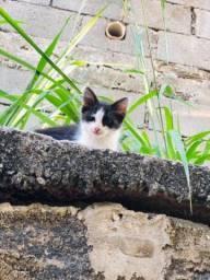 Título do anúncio: Doação de lindos gatinhos!!
