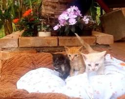 Título do anúncio: Filhotes gato - Doa-se