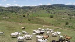 Título do anúncio: Fazenda a venda em Pernambuco