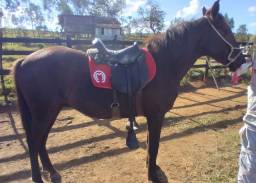 Título do anúncio: Cavalo castrado marcha picada