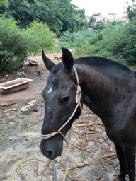 Título do anúncio: Cavalo de sela e carroça