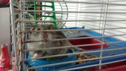 Vendo hamster 15$