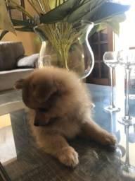 Pet Shop filhotes de patas
