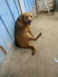 Doa-se cadelinha