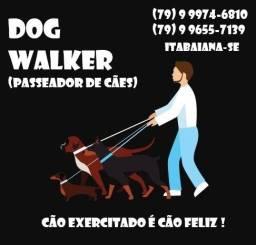 Dog Walker Itabaiana (Passeador de cães)