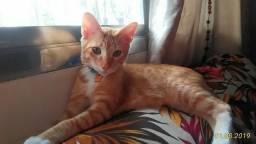 Doação conjunta de gatinhos, lindos e saudáveis
