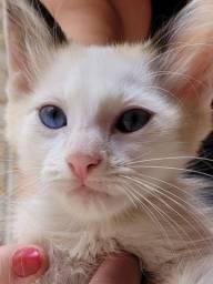 Título do anúncio: Gato filhote para doação